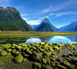 newzelandia7